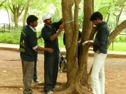 full_tree census.jpg