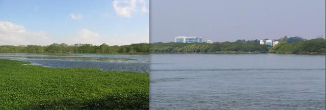 full_water hyacinth.jpg